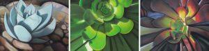 letz-design-succulents