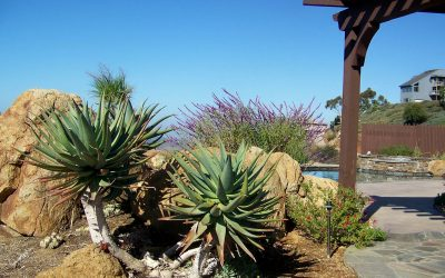 Historic Drought of California forces Landscaping to adapt
