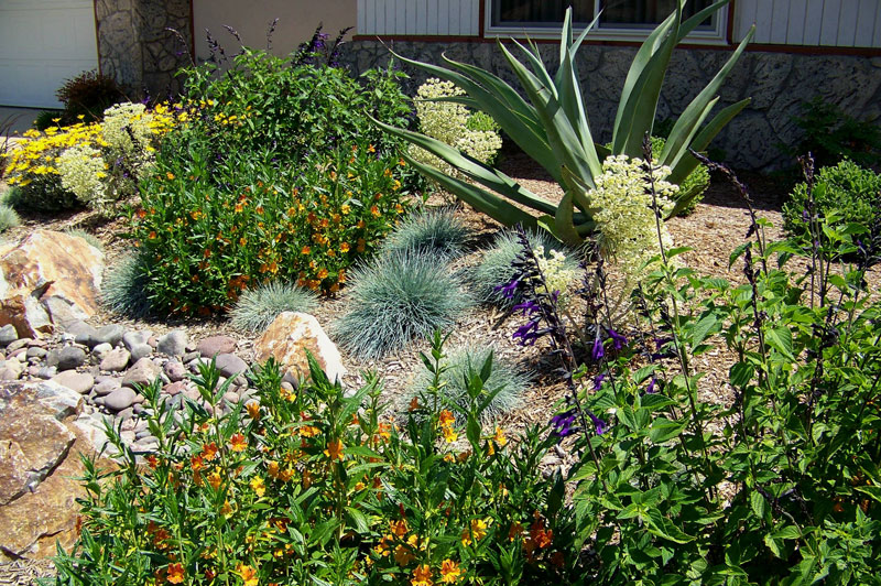 Water Wise Landscape Design