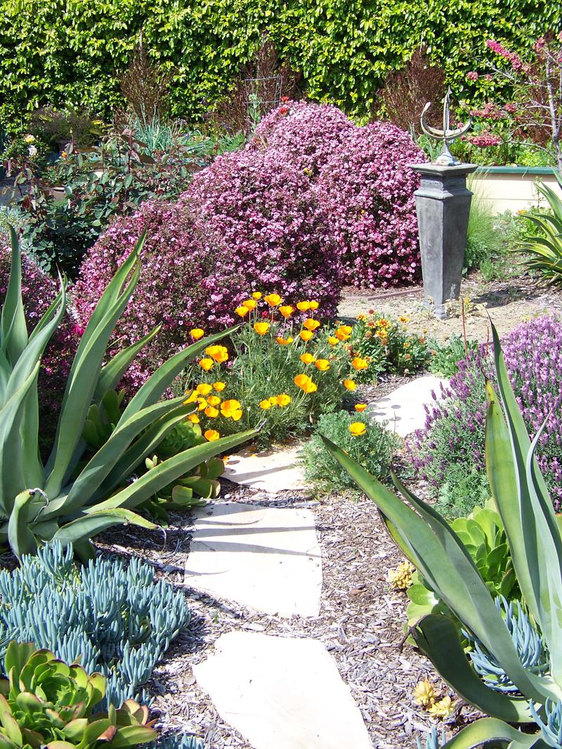 Garden Landscape Designer San Diego, Landscaping with Succulents