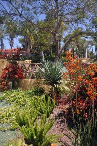 Drought Tolerant Landscaping Design
