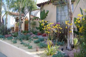San Diego Water Wise Landscape Design