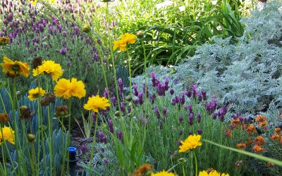 Using California Native Plants