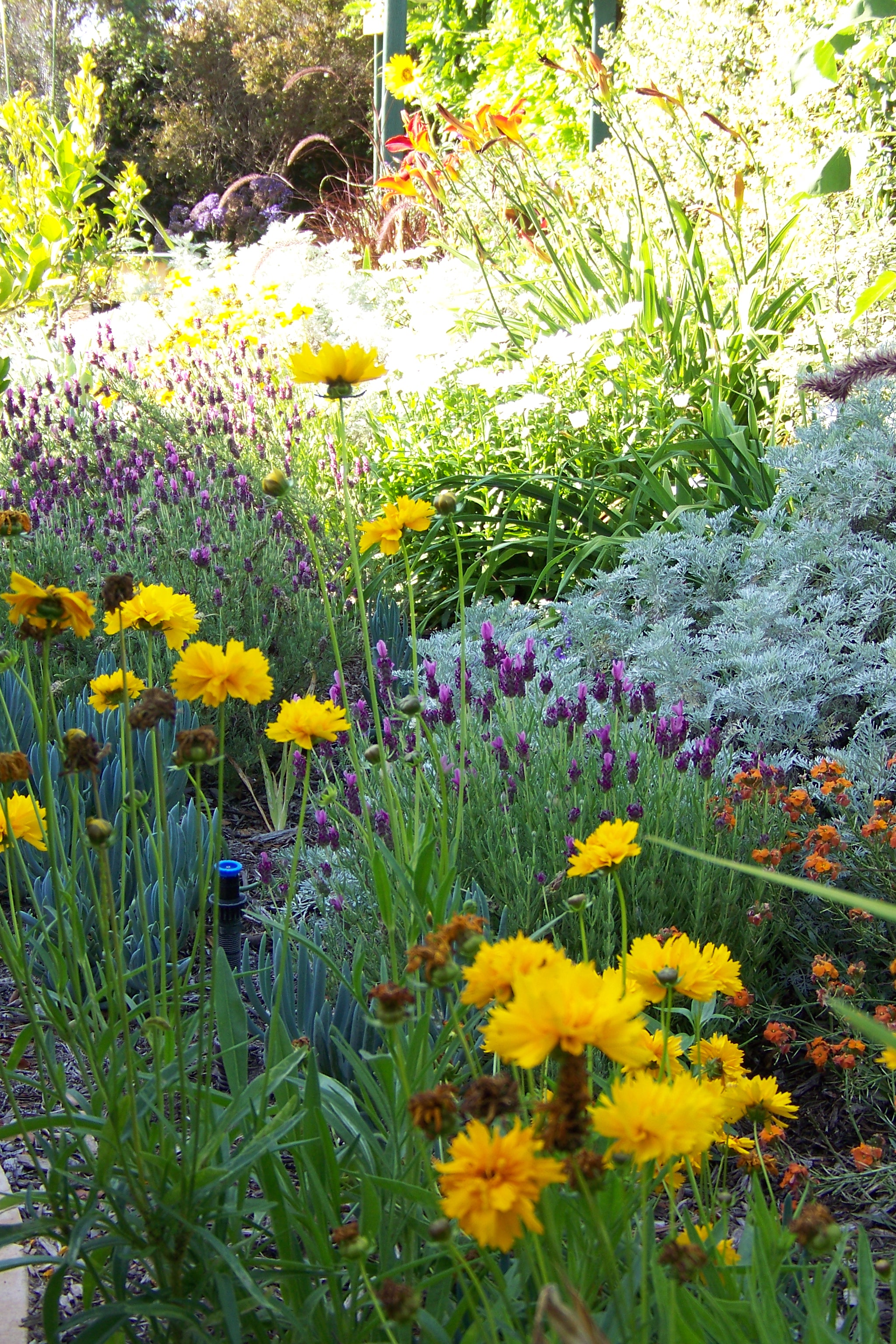 California native plants for Garden design with native plants