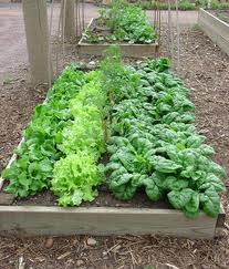 raised edible gardening bed