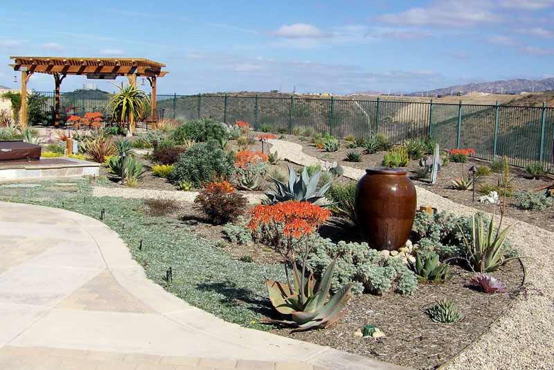 Drought Tolerant Landscape After