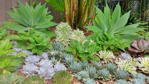 landscaping with succulents in san diego