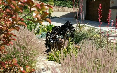 Water-Wise Landscape Design