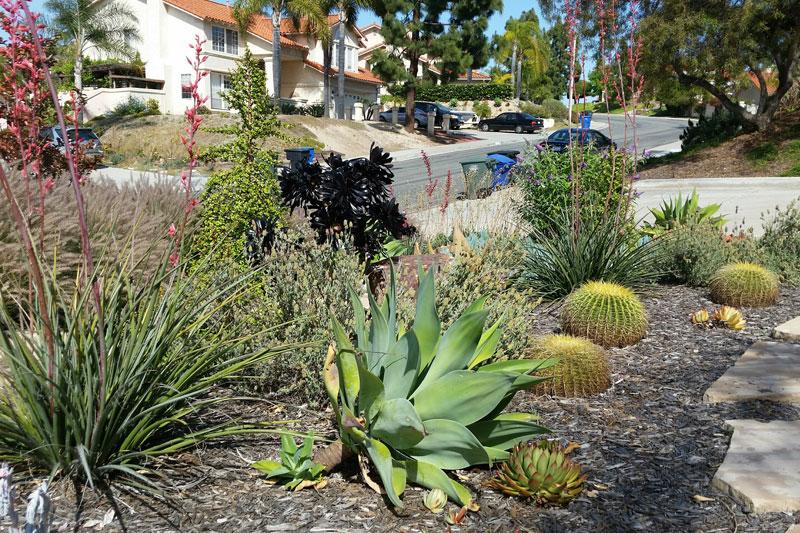 Xeriscape plants san diego water wise landscape gardening for Water garden landscaping designs