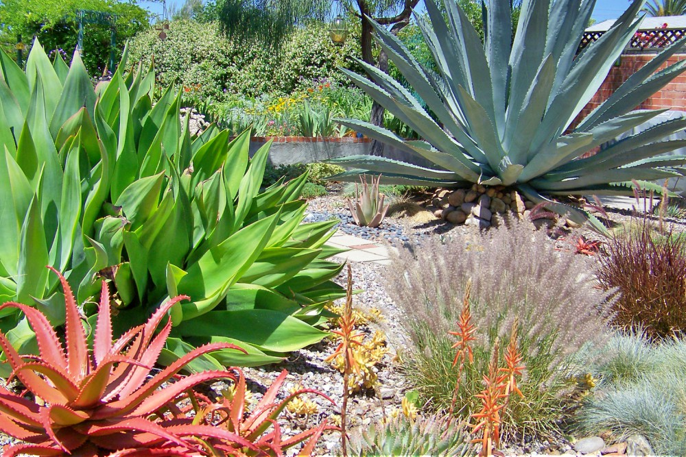 Drought Tolerant Plants for San Diego