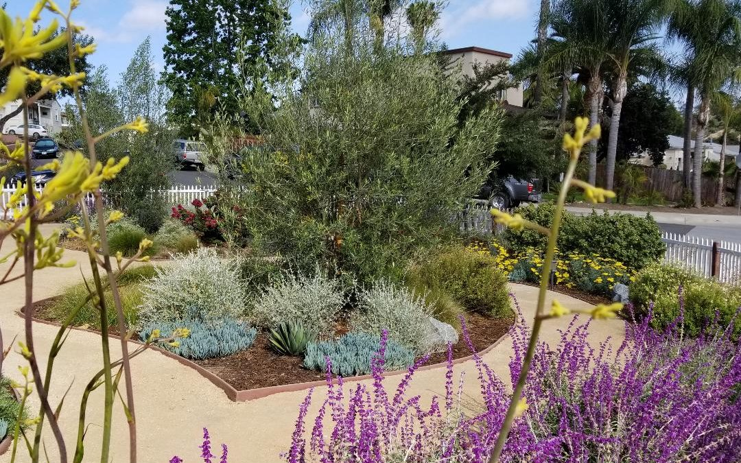 Water Wise Landscaping in San Diego