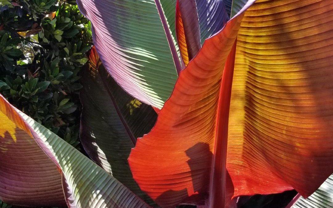 San Diego Therapeutic Garden Design
