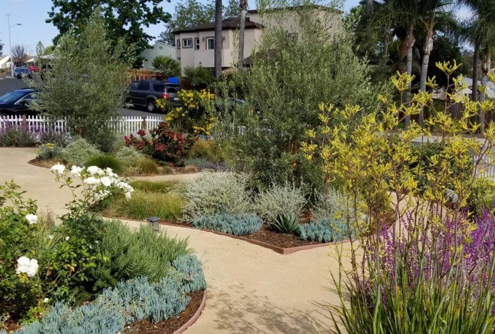 2019 San Diego Landscape Trends