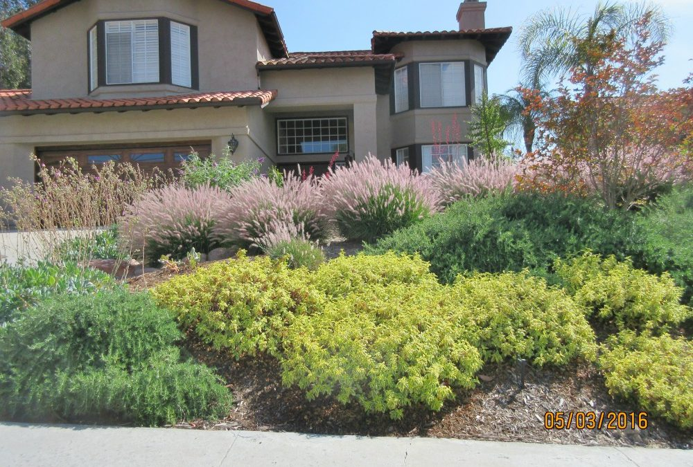 Best Plants for San Diego Slopes