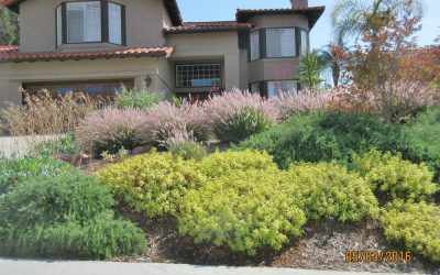 Best Plants for San Diego Slopes